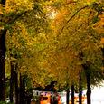 黄色い「紅葉」